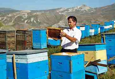 Азербайджанским пчеловодам пошли навстречу