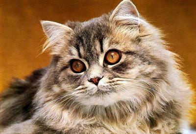 """Ты не поверишь, что сделала кошка, узнав, что беременна <span class=""""color_red"""">- ВИДЕО</span>"""