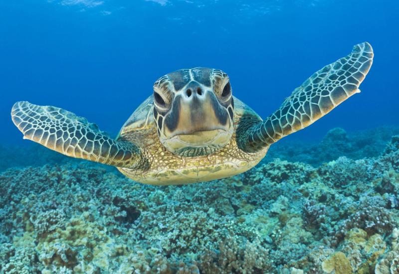 Врачи были шокированы, обнаружив это внутри черепахи
