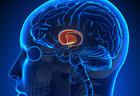 Ученые рассказали, как избавиться от умственной усталости