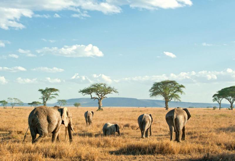 Чемпривиться перед поездкой вАфрику