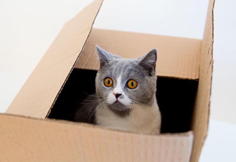 """Физики создали прозрачную """"клетку"""" для кота Шредингера"""