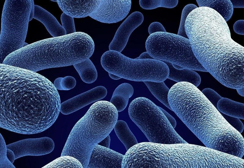 Новый ультразвук позволил услышать движения бактерий