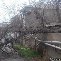 """В Баку сильный ветер повалил и сломал около 100 деревьев, есть пострадавшие <span class=""""color_red"""">- ОПЕРАТИВНЫЕ ДАННЫЕ - ОБНОВЛЕНО </span>"""