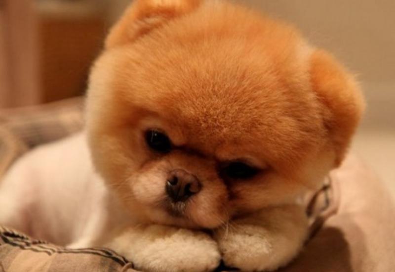 """Умерла самая очаровательная в мире собака <span class=""""color_red"""">- ФОТО</span>"""