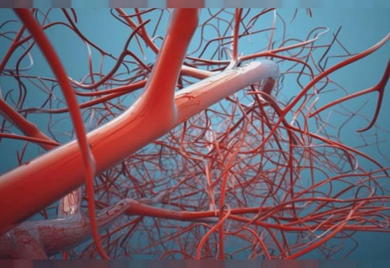 В костях обнаружен совершенно новый тип кровеносных сосудов