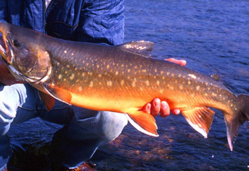 """Ученые назвали самую полезную для здоровья рыбу <span class=""""color_red"""">- ВИДЕО</span>"""