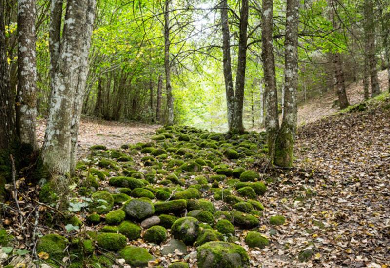 В Азербайджане будут уточнены границы лесов