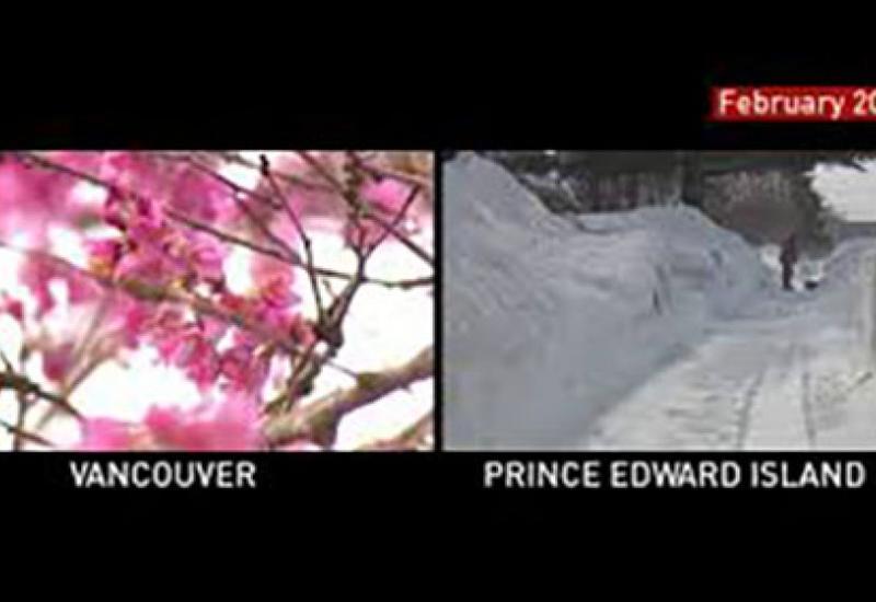 Из-за аномальной погоды в Канаде зацвели вишни