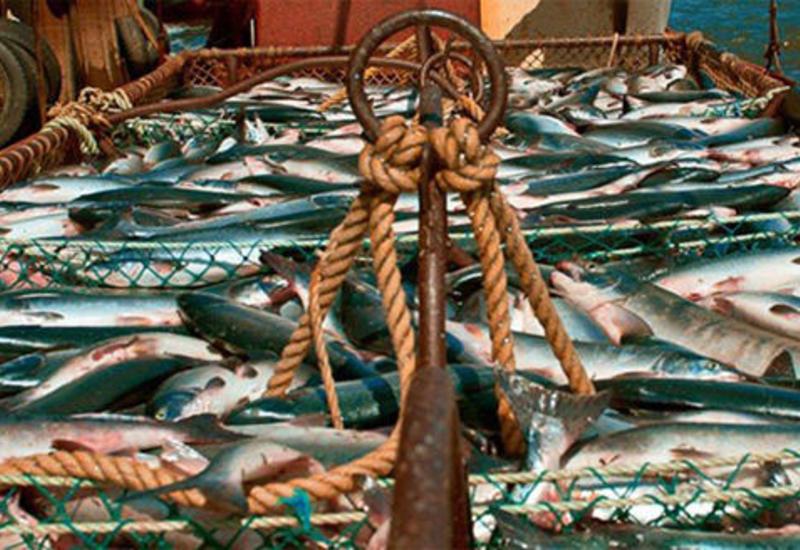 Сколько Иран выловил рыбы на Каспии?