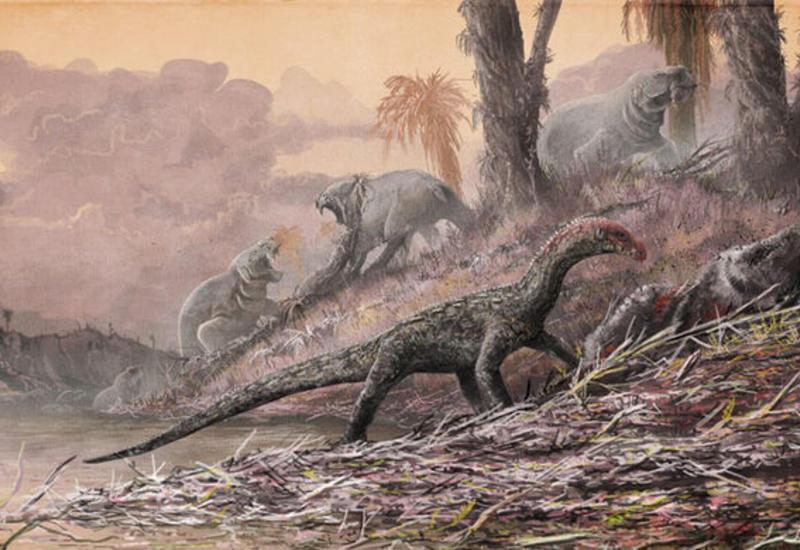 В Австралии обнаружили гигантскую тропу динозавров