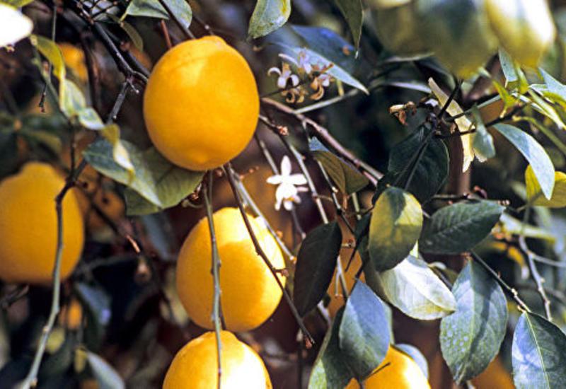 В США назвали лимоны предметом роскоши для россиян