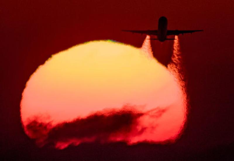 Неожиданно появившийся скорпион напугал людей на борту самолета