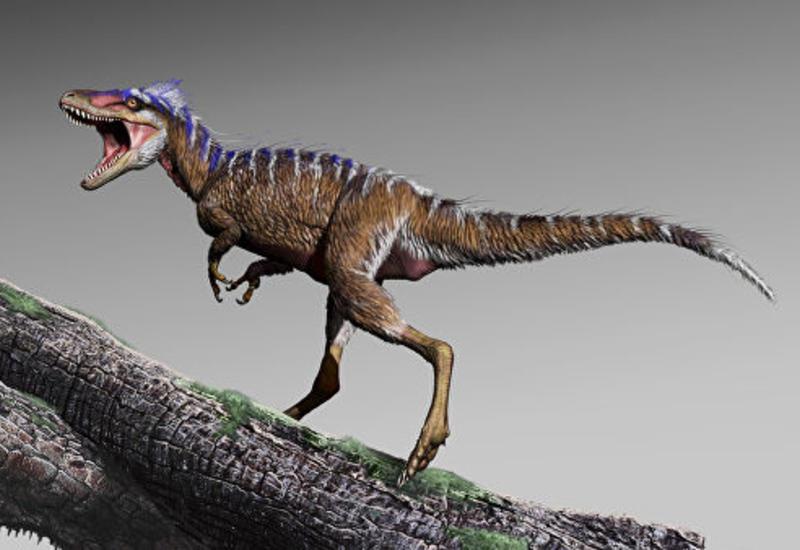 Палеонтологи нашли в США тираннозавра размером с собаку