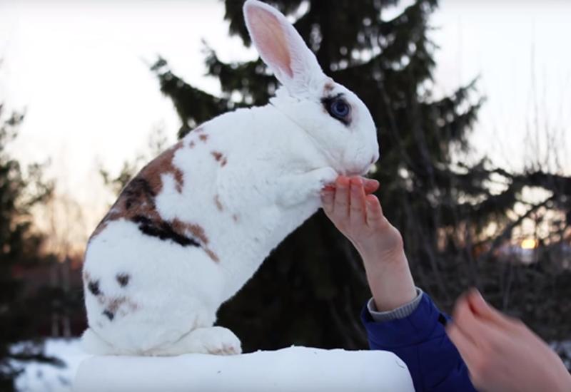 """В Финляндии кролик попал в книгу рекордов Гиннесса <span class=""""color_red"""">- ВИДЕО</span>"""