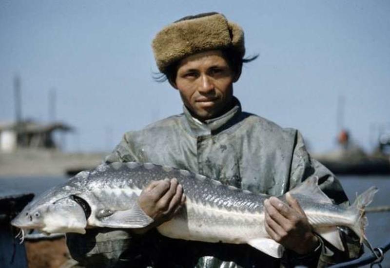 Как в СССР добывали черную икру