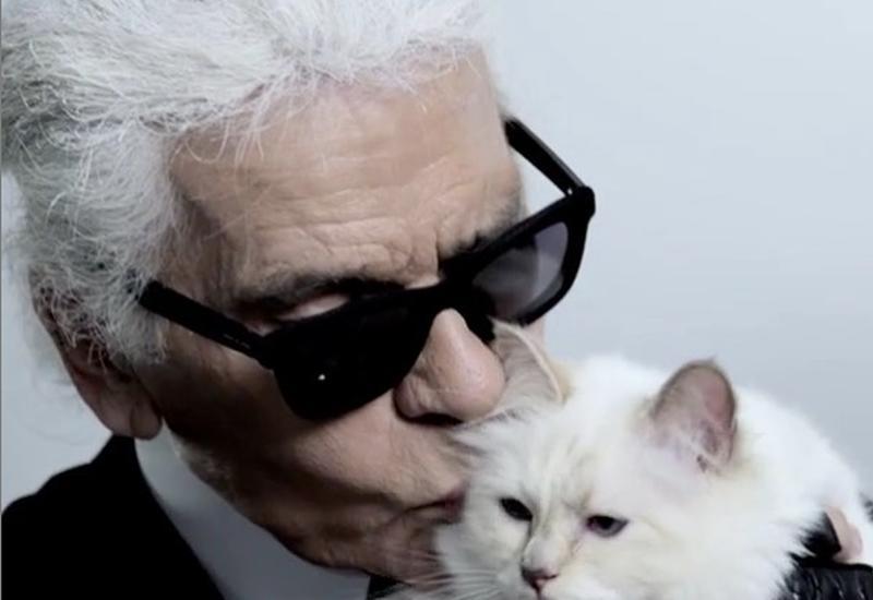 Любимая кошка Лагерфельда может получить 150 миллионов фунтов
