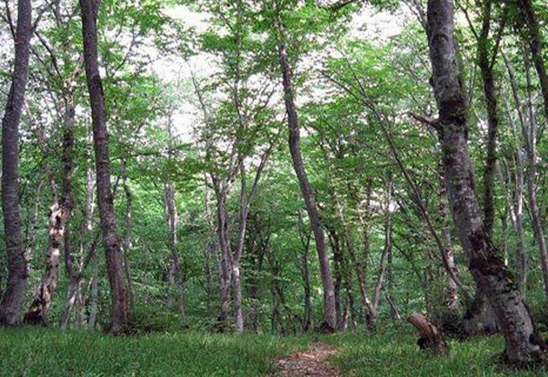 В Азербайджане подготовлен первоначальный проект Национальной лесной программы