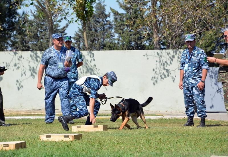 Азербайджанские собаки пользуются большим спросом в мире