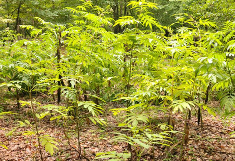 Предприниматели смогут взять в аренду земли лесного фонда