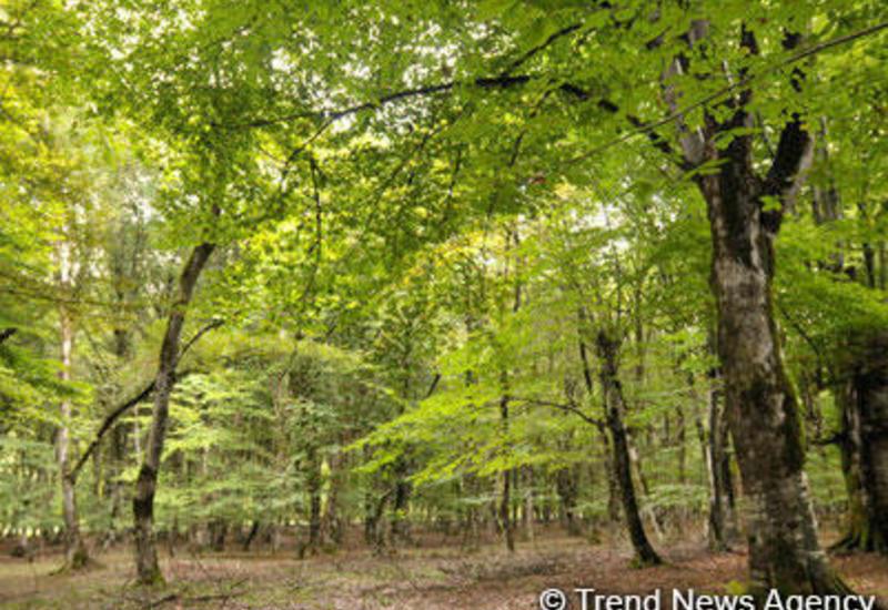 Азербайджан улучшит управление лесами