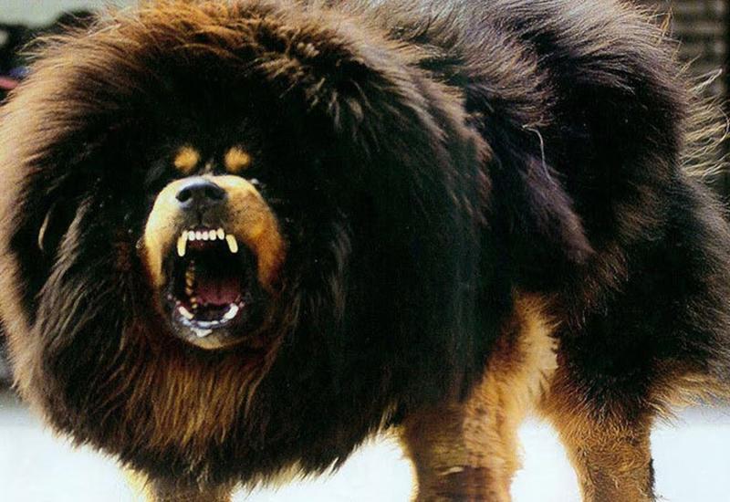 В Подмосковье собаки напали на юных фигуристок