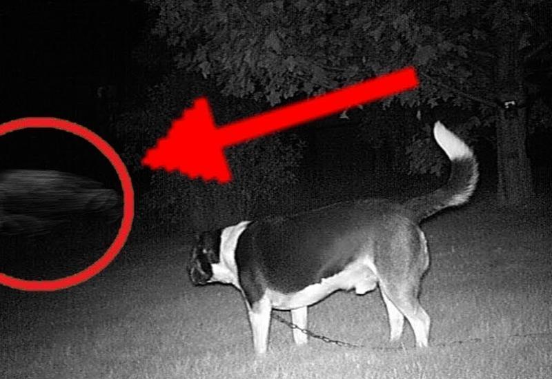 10 страшных моментов, когда питомцы видят реального призрака
