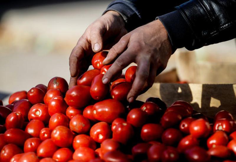 Россия хочет больше турецких помидоров