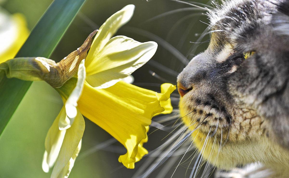 Весна пришла: лучшие фотографии пробуждения природы