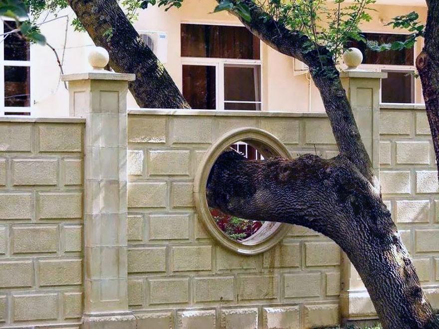 14 домов, архитекторы которых отказались спиливать деревья