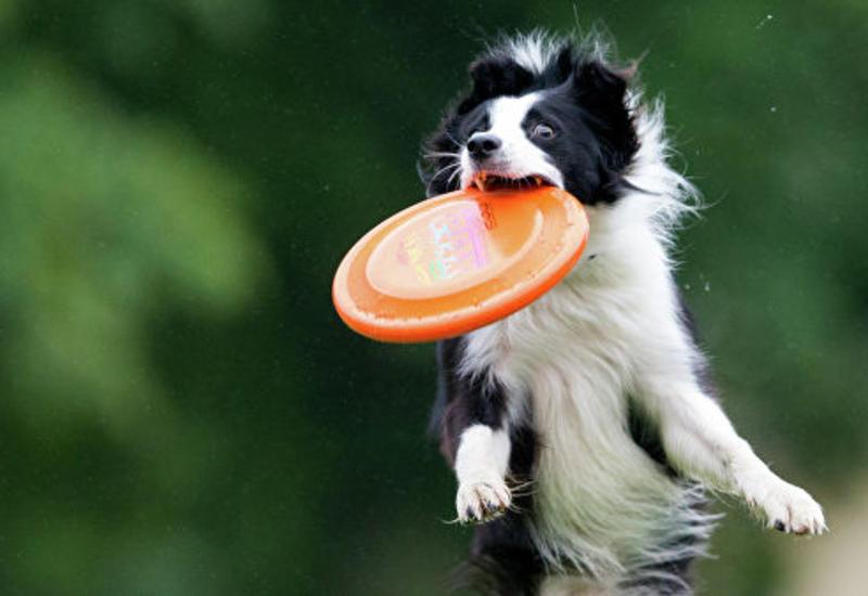 Ученые подтвердили, что собаки полезны для здоровья их хозяев
