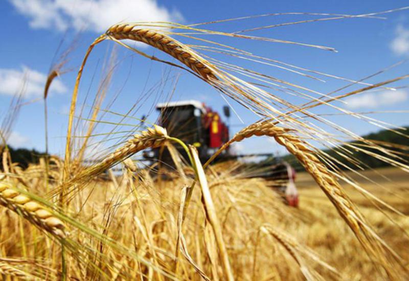 Азербайджан активно развивает агросектор
