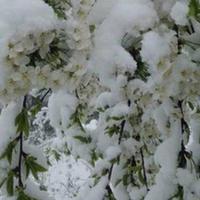 """И это апрель?! <span class=""""color_red"""">- Снежные пейзажи Ярдымлы - ФОТО</span>"""