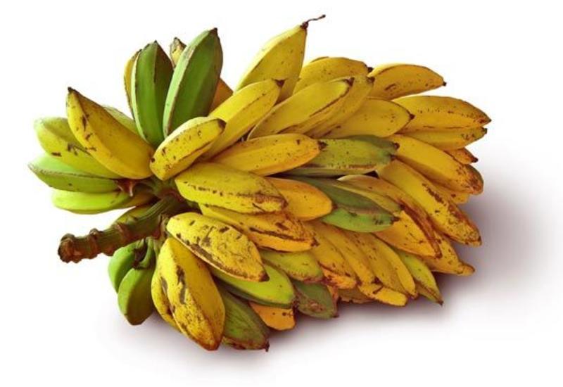 Сколько алкоголя содержится в бананах?