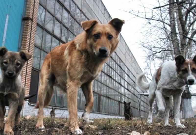 Собака бывает кусачей - Как с этим борются в мире и Азербайджане?