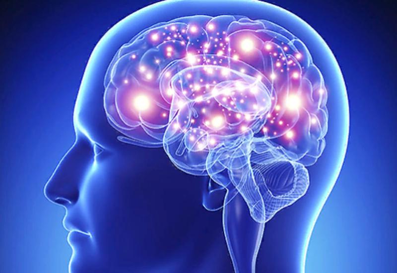Приводит ли увеличение объема мозга к лучшему обучению?