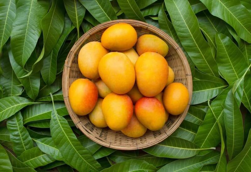 Манго помогает при запоре: полезные свойства и варианты приготовления