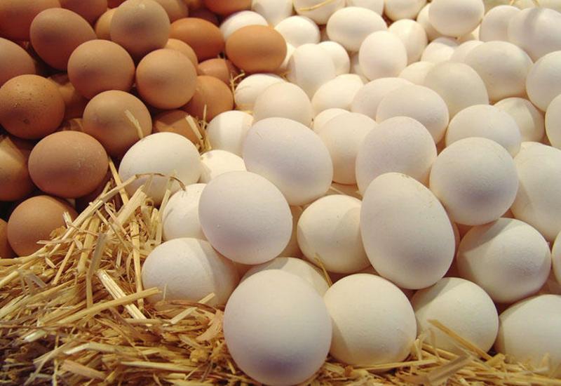 Azərbaycanda yumurta istehsalı artırılacaq