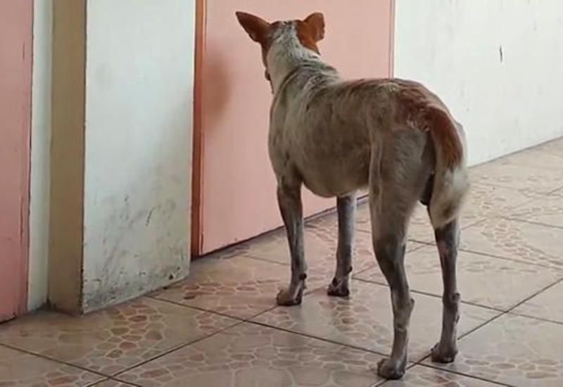 Верный пес прождал умершего учителя у кабинета две недели