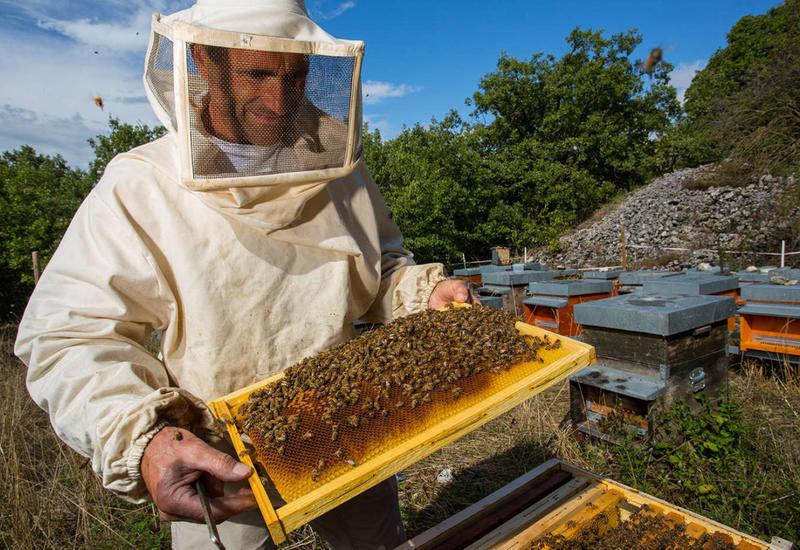 Азербайджанский мед покорит зарубежные рынки