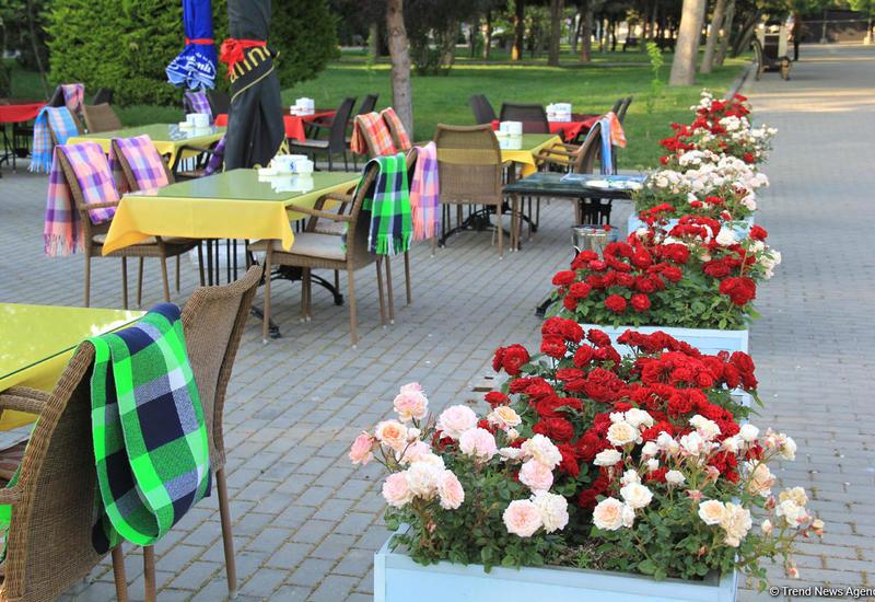 Бакинский бульвар в цветах