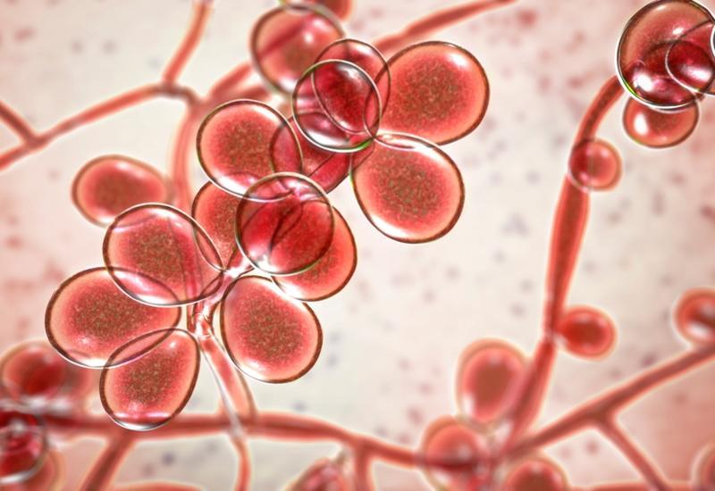 Американские ученые разработали альтернативу антибиотикам