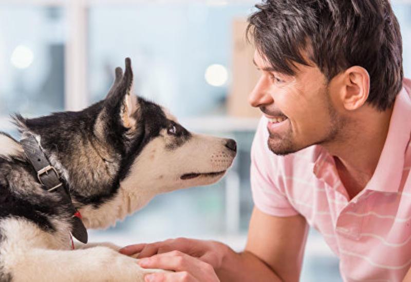 """Собаки """"заражаются"""" стрессом от хозяев - ученые"""