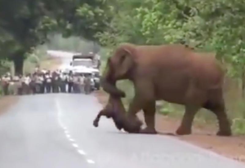 Стадо слонов устроило проводы мертвому детенышу