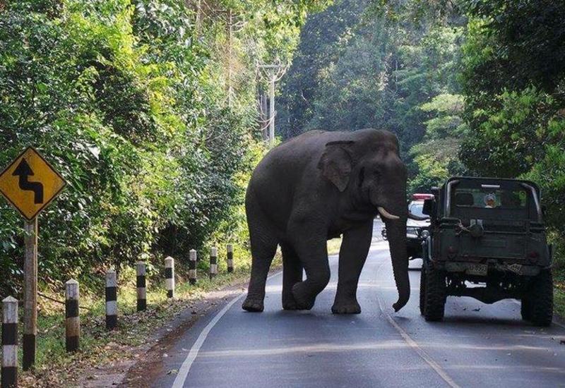 Botsvanada fil fermeri öldürdü