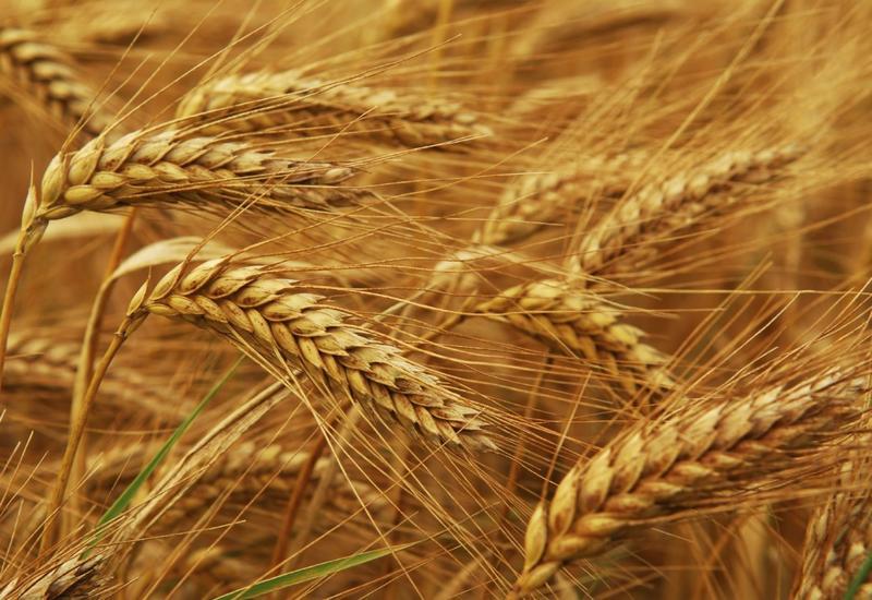 МЧС Азербайджана закупает зерно