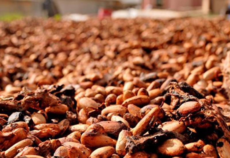 Ученые нашли в какао лекарство от ожирения и диабета
