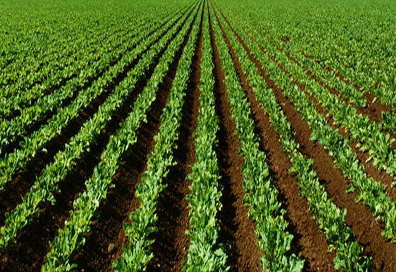 В Азербайджане начнут более эффективно использовать сельхозземли