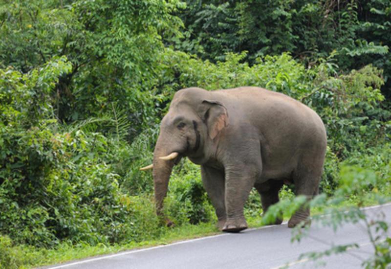 В Канаде слон покалечил дрессировщика