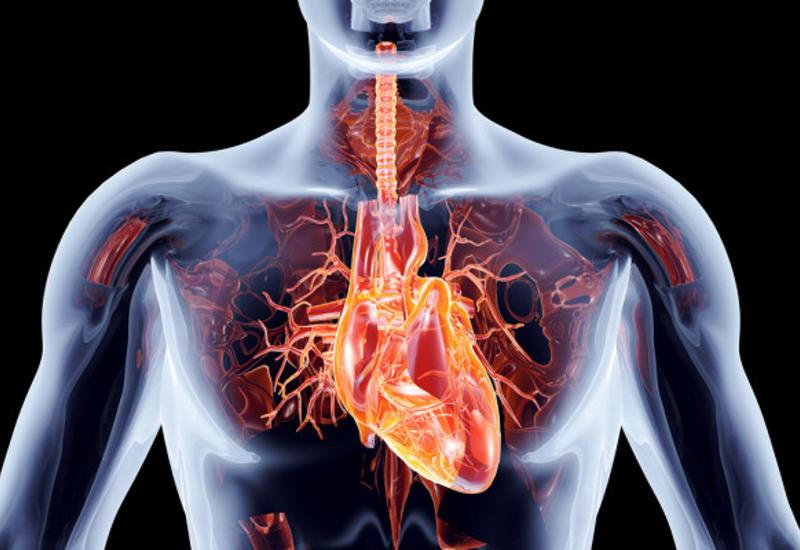 6 органов, без которых человек может прожить